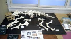 骨格標本2