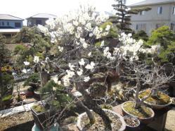 お花飾り 002