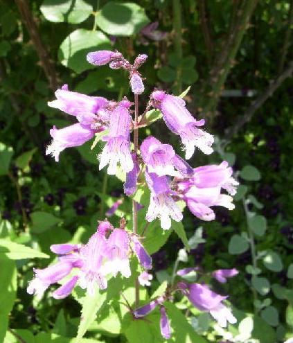 庭に植えたい花1