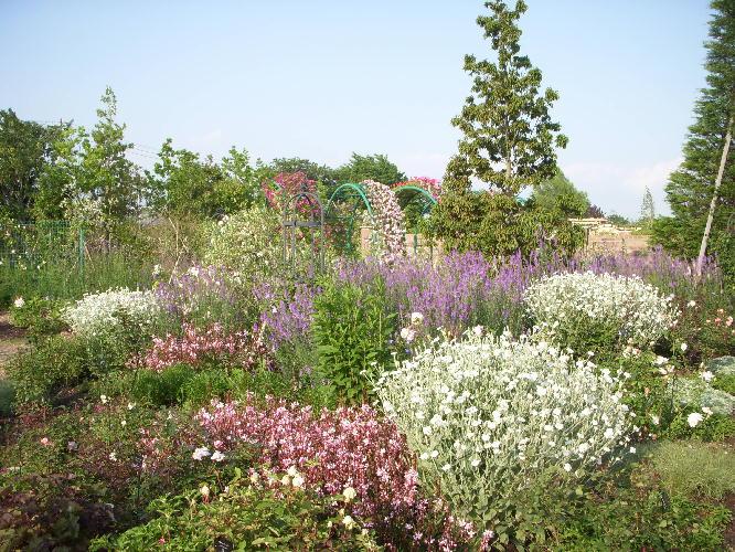 花菜ガーデン0607