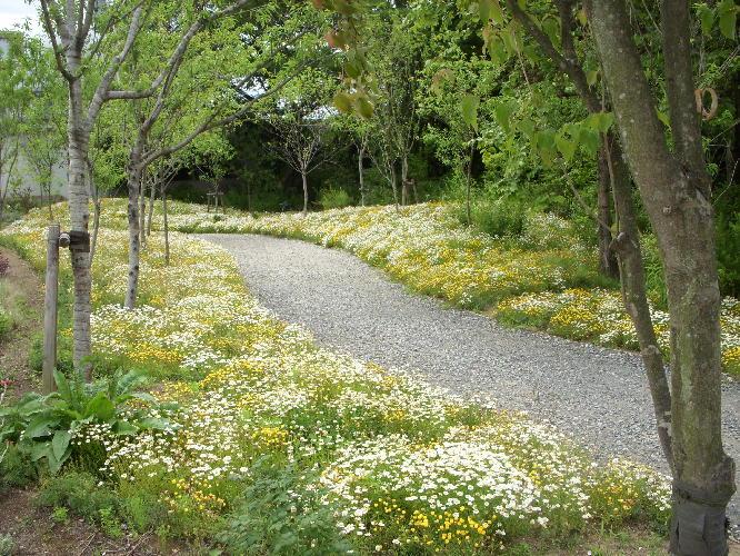野鳥の森ガーデン2