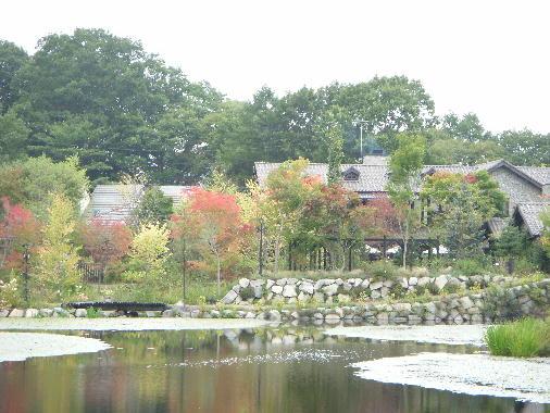 秋風景2010-1