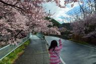 ぷに子と高遠の桜 (城下)