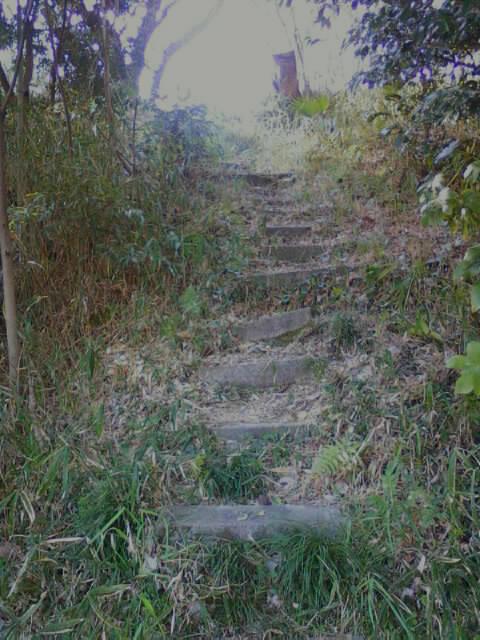 竹林ボロ階段