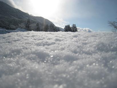 1/31 雪
