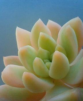 黄麗錦の斑具合 4