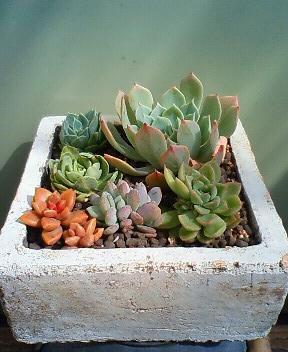 頂き物鉢 1