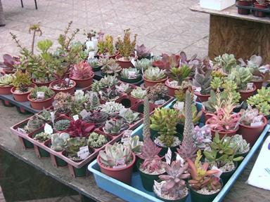 いつかの植木市 4