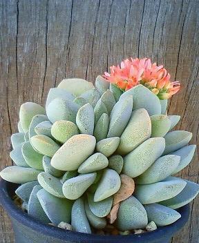 花の命は結構長い 2