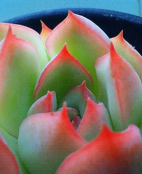 花うららを愛でる 2
