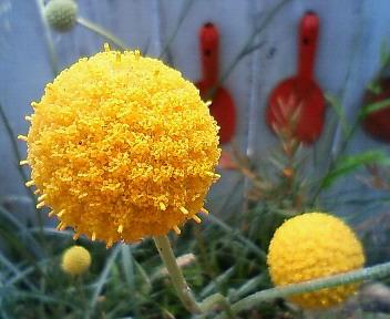 また更に花に萌える 6