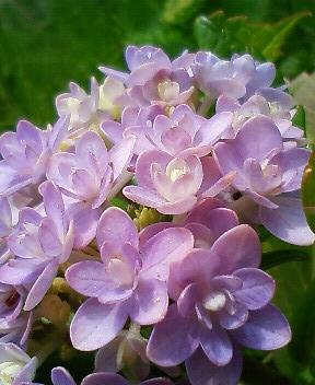 また更に花に萌える 5