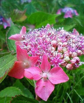 また更に花に萌える 2