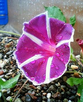 ハウスの脇でひっそりと咲くもの 2