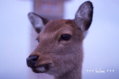 いっぱい鹿さんがおりますです、、、
