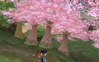 桜綺麗な朝
