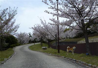 sumaura2.jpg