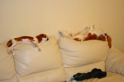 すごい寝方してる2匹。