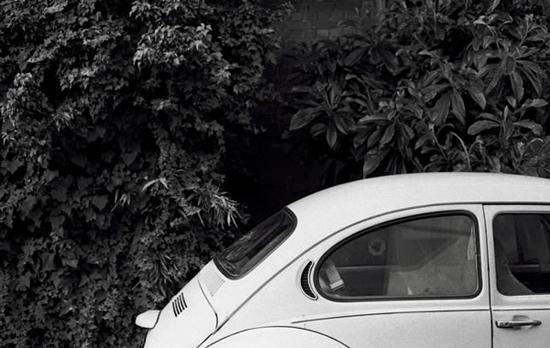 Beetle-132205379.jpg
