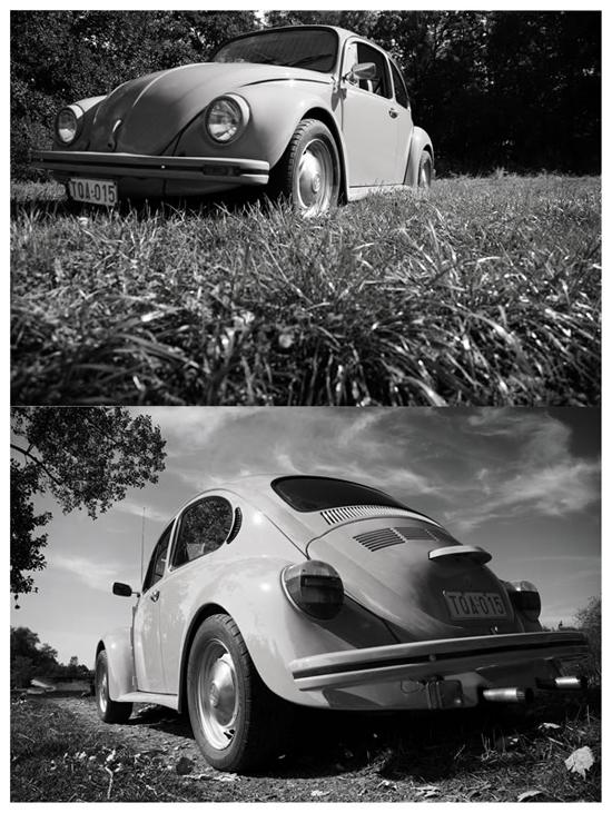 Beetle-136583704.jpg