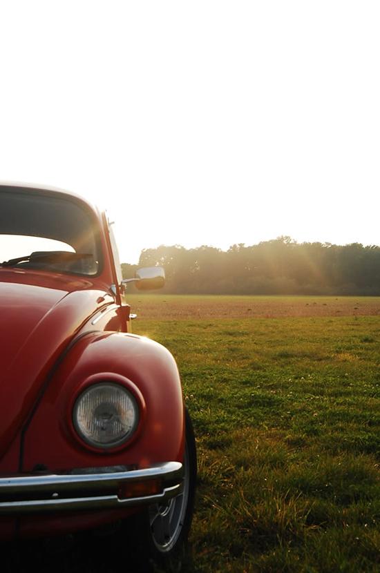 Beetle-99973388.jpg