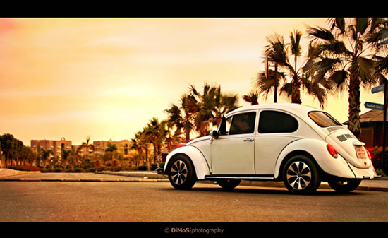 The-White-Beetle-106911344.jpg