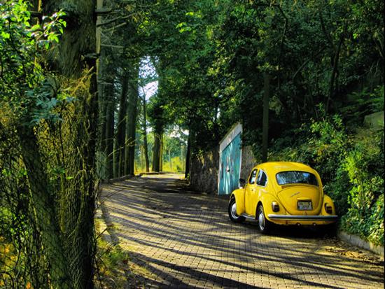 Yellow-Beetle-93592713.jpg