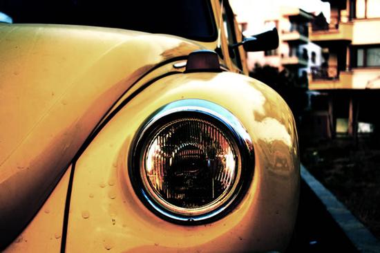 beetle-97407377.jpg