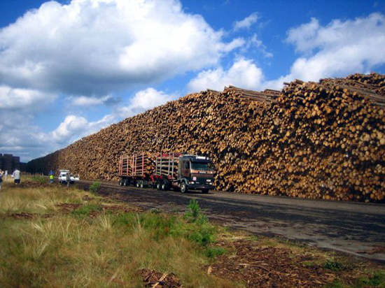 worlds_biggest_timber_storage_6_pics-6.jpg