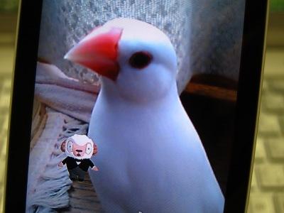 20110513_しつじくん
