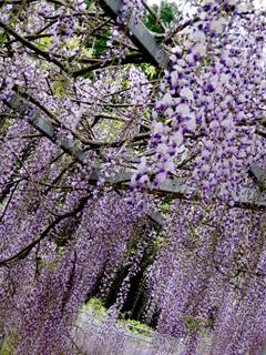 fuji1_20100523141210.jpg