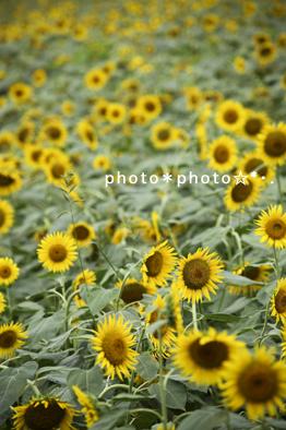 IMG_8125.jpg