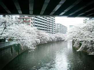 megurogawa.jpg