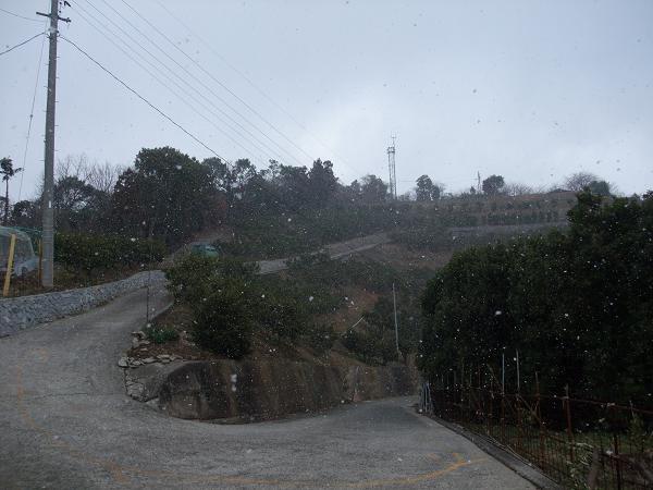 とびしま ナガタニ展望台(2)