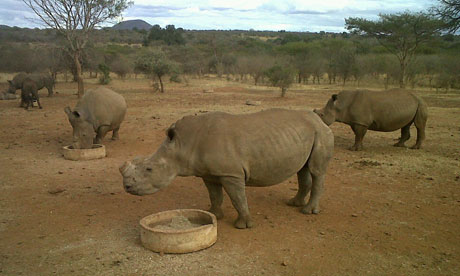 Rhinos-feed-at-Mauricedal-007.jpg