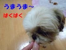 2011111505.jpg