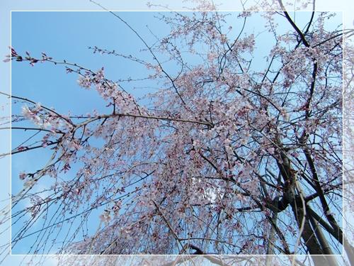 20100323_2.jpg