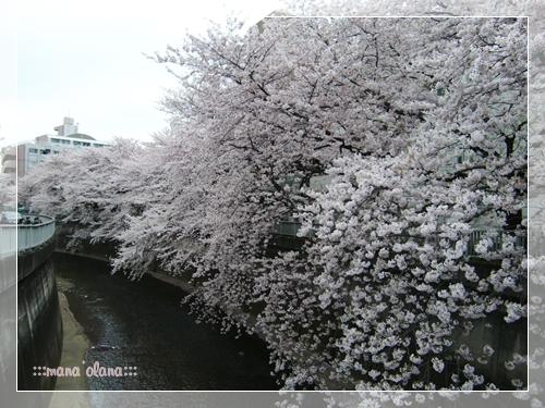 20100403_2.jpg