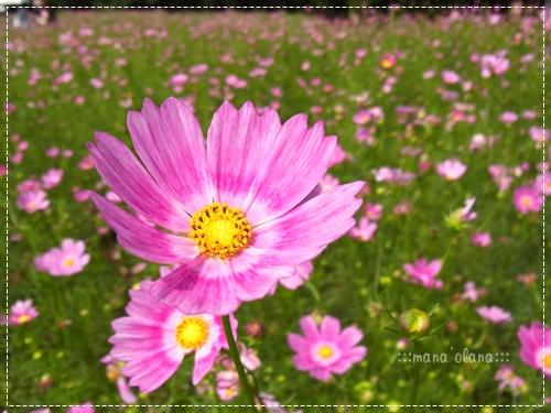 20100919_5.jpg