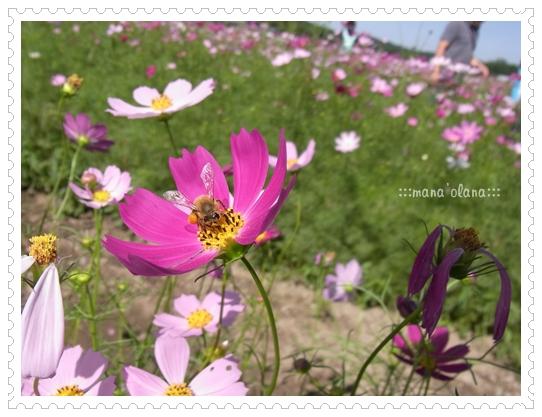 20100926_5.jpg