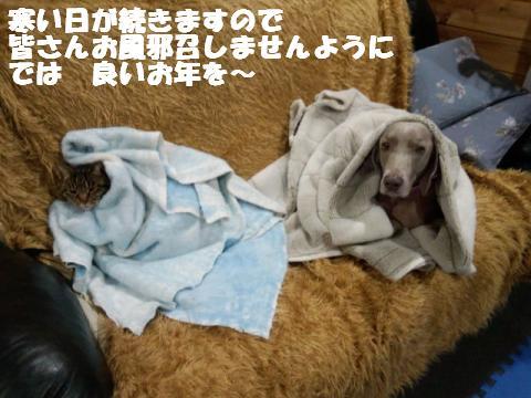 DSC_0344_convert_20121227110655.jpg