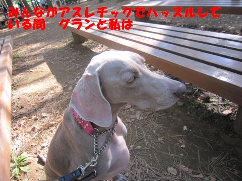 IMG_0712_convert_20121129115343.jpg