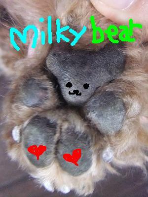milky bear
