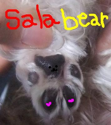 sala bear