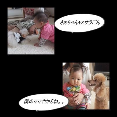 cats1_20101012204339.jpg