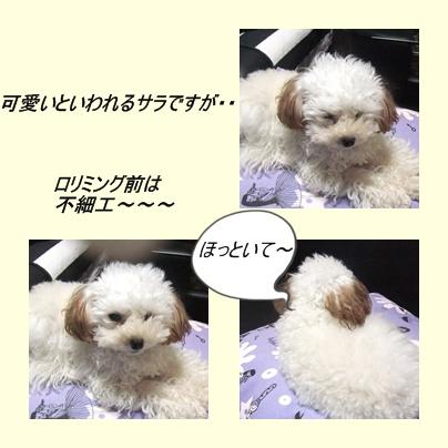 cats2_20100430215330.jpg