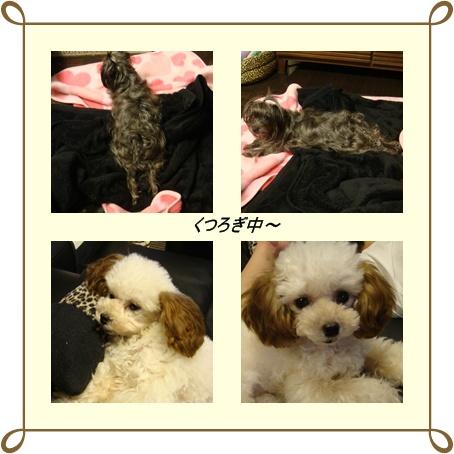 cats3_20100303094949.jpg