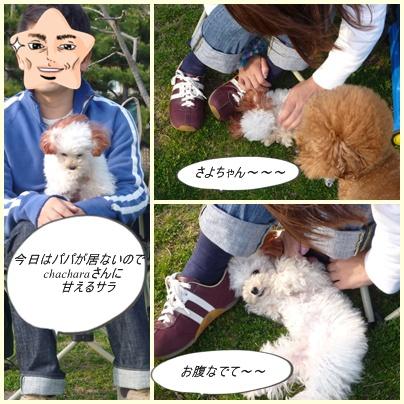 cats3_20100321185557.jpg