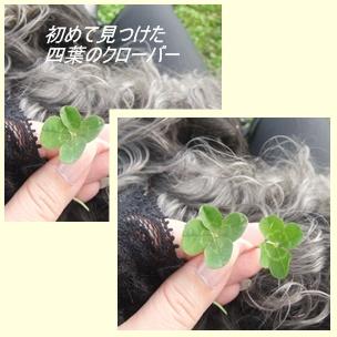 cats3_20100627214438.jpg