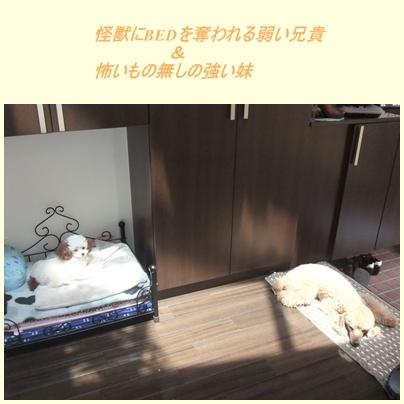 cats6_20100508090856.jpg